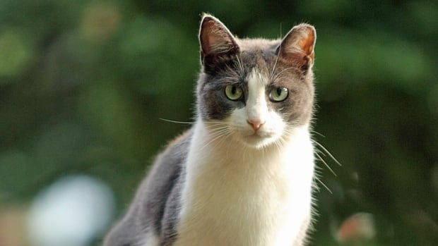Halifax regional council has approved a $40,000 grant to set up a spay and neuter clinic for low income pet owners and feral cat colonies.