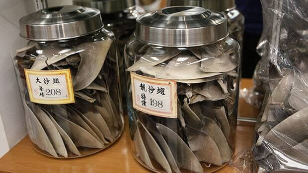 Toronto city council will vote today on a motion that would ban the sale of shark fins.