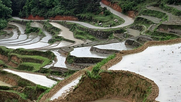 The terraced agricultural heartland of Hunan province in southern China, where the officials who enforce the country's one-child policy are under investigation for seizing babies and sending them to orphanages for a fee.