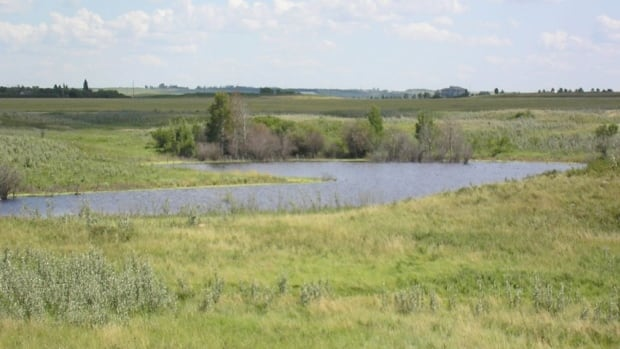Plans call for road construction across Saskatoon's northeast swale, an ecologically sensitive area north of the new Evergreen subdivision, and east of the South Saskatchewan River.