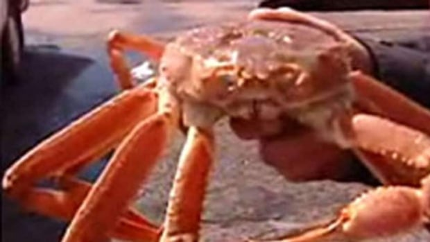 There are about 28 snow crab fishermen on P.E.I.