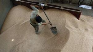 tp-egypt-wheat-cp-9220277