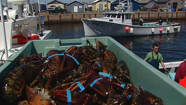 At the beginning of the season, prices were about $1 per pound more in Nova Scotia.