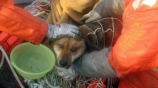 Coast guard rescuers retrieve a dog believed to have been at sea for three weeks after the Japanese tsunami.