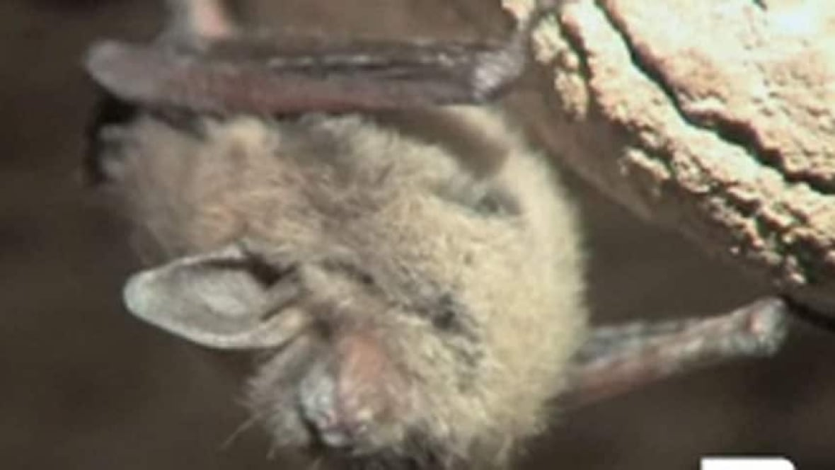 how to help bats nova scotia