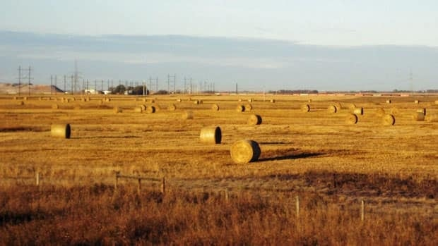 In this Oct. 19, 2010, photo, hay bales sit in field near Saskatoon. The Conservative government is tabling legislation Monday to end the Canadian Wheat Board's monopoly over Western Canada's wheat and barley farmers.