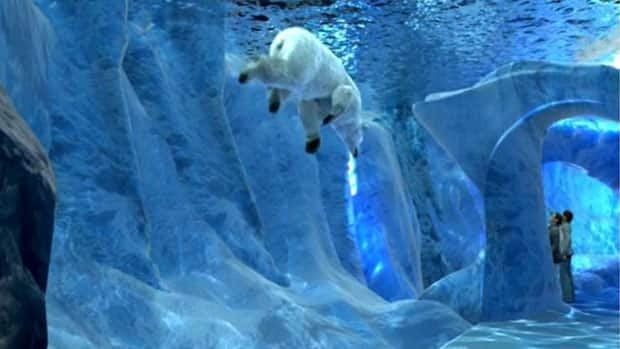 The new polar bear exhibit will include underwater and above-ground viewing opportunities of bears and seals through a clear wall.