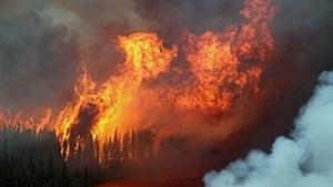 220-ont-fires-00993379