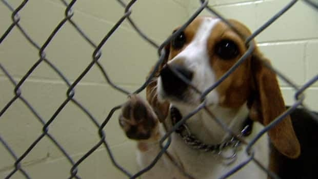 There is an investigation into a mass breeding facility in Nova Scotia that was selling puppies to Pets Unlimited.