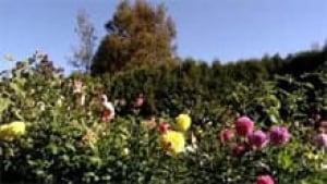 si-nb-fortress-garden-220