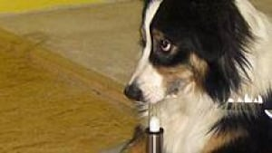 si-cancer-sniffer-dog-test-220-cp