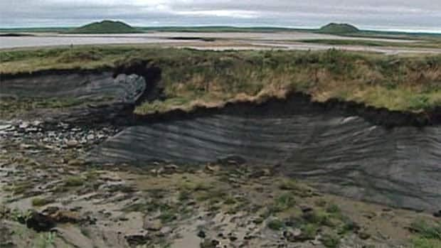Layers of permafrost can be seen on the side of this cliff near Tuktoyaktuk, N.W.T. Pingos, or mounds of earth-covered ice, can be seen in the background.