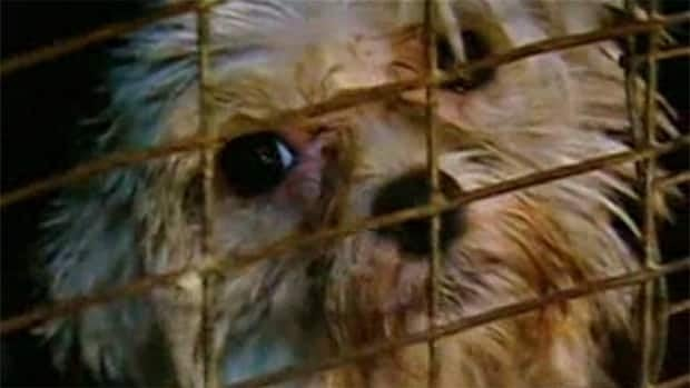 Edmonton Humane Society Dogs For Sale