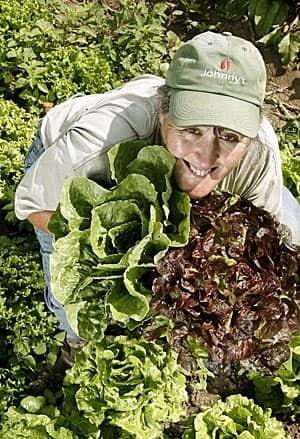 organic-300-7056322
