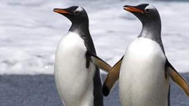 li-620-penguins-toronto-cbc