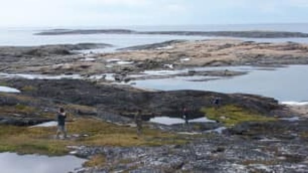 Inuit field guides conduct surveys for eider duck nests near Cape Dorset, Nunavut in this file photo. Communities in both Canada and Greenland are still monitoring sea birds for avian cholera, but bird deaths from the disease appear to be lessening.