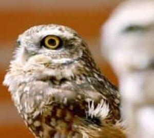 owls-cp-1446360