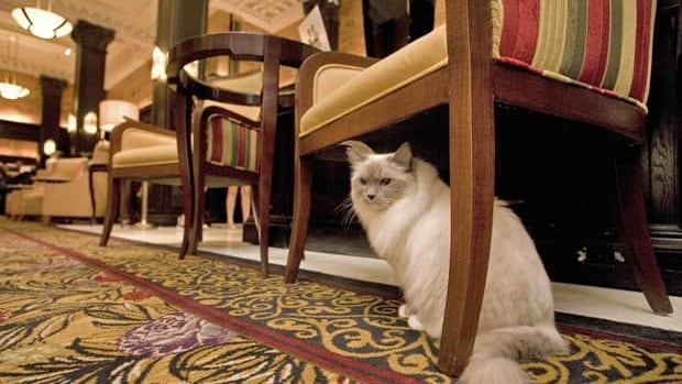 Matilda, the resident cat of New York's Algonquin Hotel, has been banned from the lobby, ending a feline tradition that began in 1932.