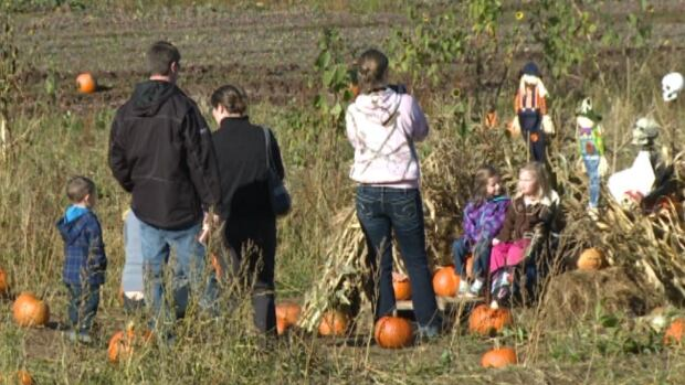 Families visit Lomond's Farms in Steady Brook to pick their Halloween pumpkins and take advantage of the holiday weekend.