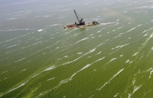 Lake Erie Algae Water