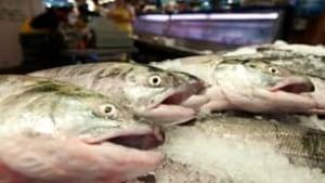 salmon-cp-9299945-306x172