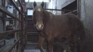 cgy-horse-richelieu