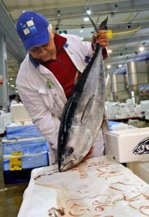 bluefin-tuna-cp-8072219