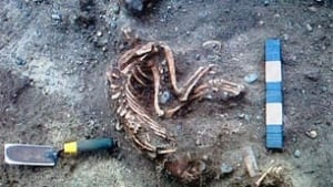bc-100419-digging-bill6