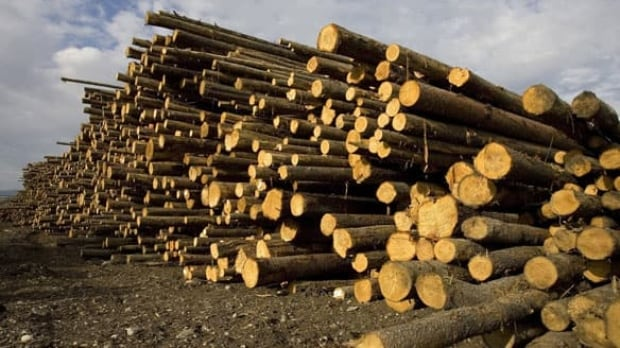forestry-cp-w-3885301