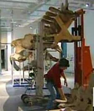ottawa-whale-museum-new