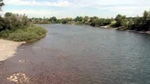 tp-cgy-rivers-fish1