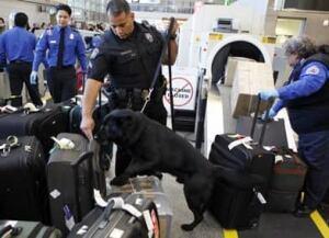 air-security-dog-392-789998