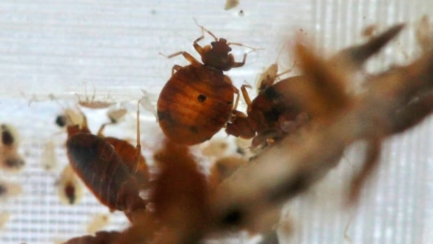 A Montreal mom says she lost everything after her subsidized apartment was infested by bedbugs and cockroaches.