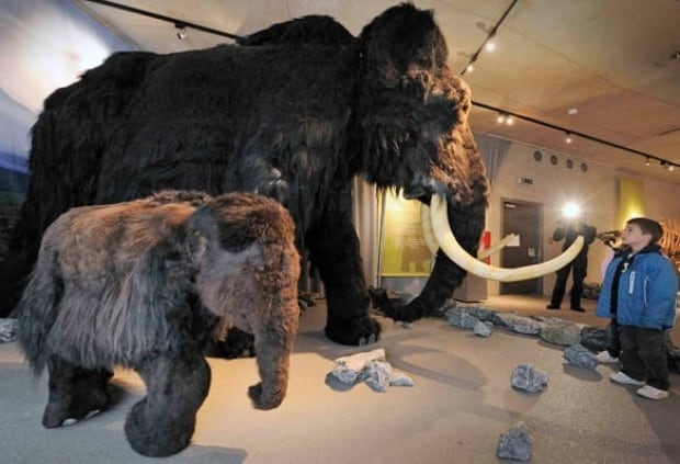100919-woolly-mammoth-ap-9781132_2-584px