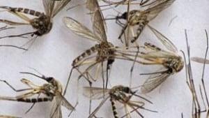 sk-mosquito-file1