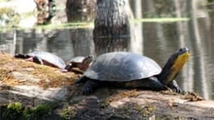 tp-turtles-cp-151010