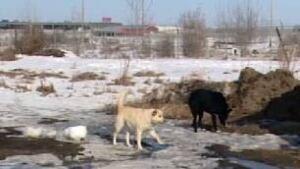 tp-edm-stray-dogs-hobbema