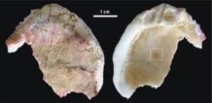 neanderthal-shells-2