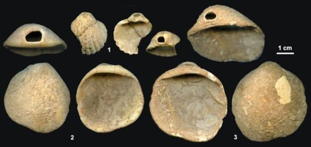 neanderthal-shells