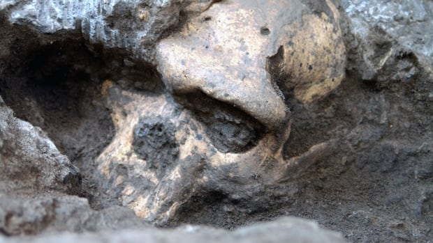 The pre-human skull found in the ground at the medieval village Dmanisi, Georgia, is the most complete ancient hominin skull found to date. Its combination of features suggests that several of what were thought to be separate pre-human species are actually the same species.