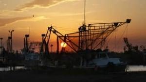 f-shrimping-boats-8560643