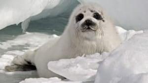 tp-seal-hunt6462213[2]