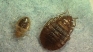 bed-bug-family-cp-6558017-306x172