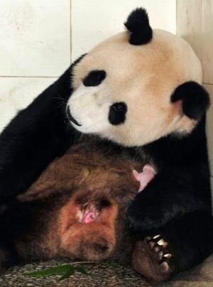 100917-panda-with-baby-ap-9422155-320px
