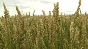 sk-crop-frost-2010