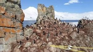 tp-penguins
