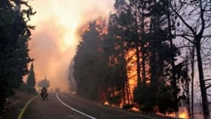 tp-israel-forest-fire-cp-9846944
