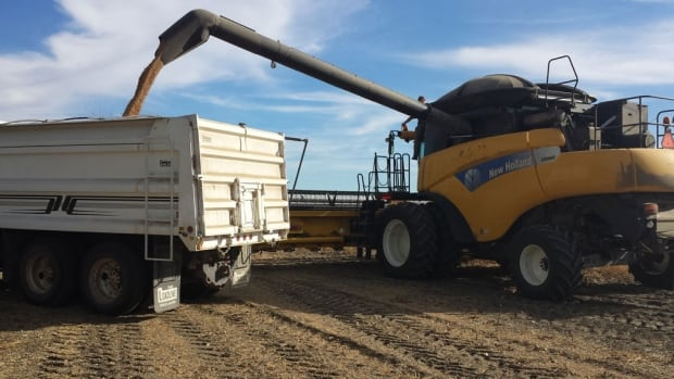 Saskatchewan's harvest is virtually complete, with 97 per cent of the crop in the bin.