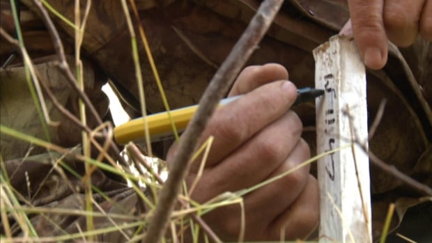 A survey of Beothuk sites along the Exploits River has turned up more than researchers anticipated.