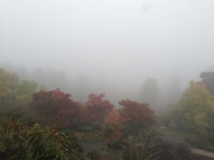Queen Elizabeth Park in the fog